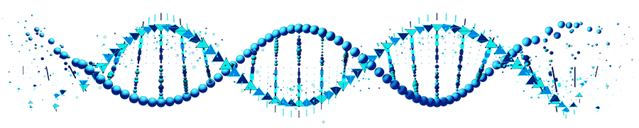 Double Helix DNA