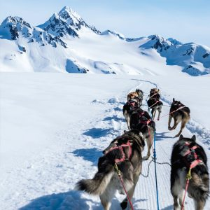 Sled dogs pulling sled through snow